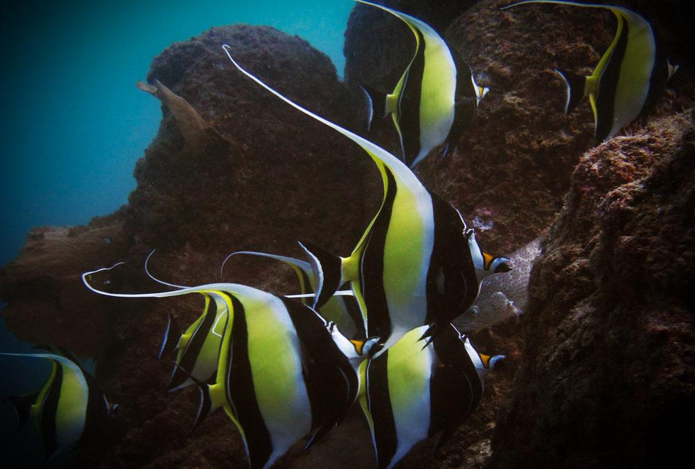 Los Cabos Underwater