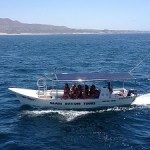 cabowhaletrekboats-150x150