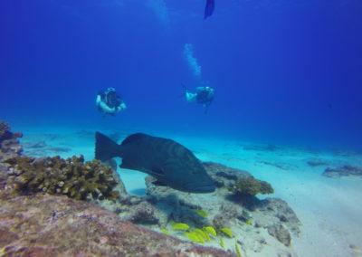grouper in cabo pulmo