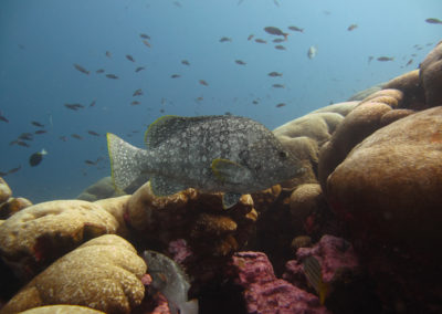 grouper in cabo pulmo