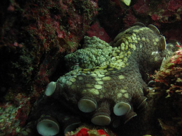 octopuss cabo san lucas