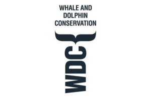 Whale Wathcing Cabo San Lucas - Whales and Dolphin Conservation
