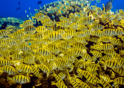 Butterfly fish Chileno Bay