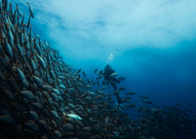 Diver with school of fish in Cabo