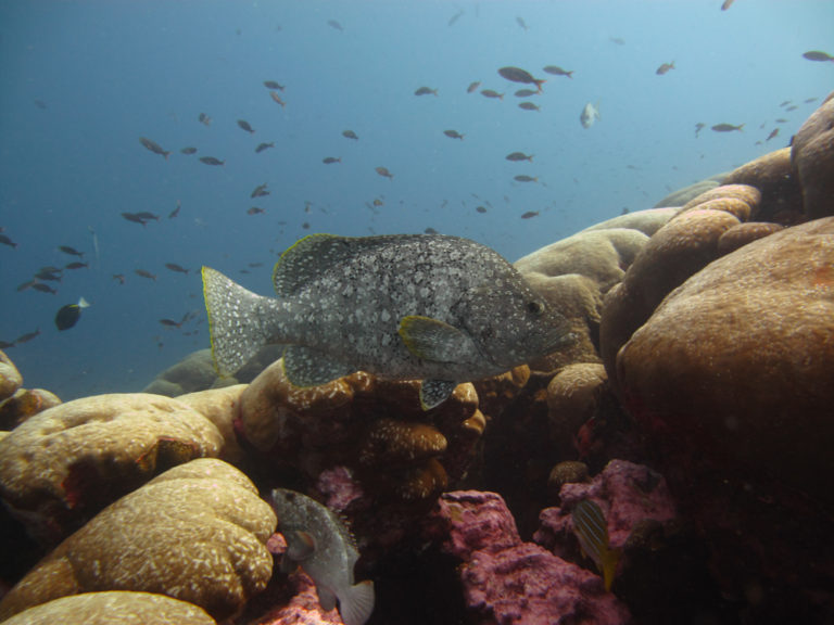 Grouper in Lands End Los Cabos