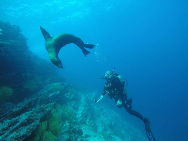 Sea-Lion-Galapagos-Diving