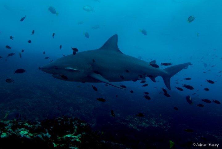Cabo Pulmo Sharks