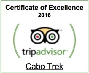 Trip Advisor - Certificate of Excellence 2016 winner